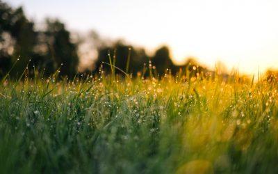 Die Ayurvedische Morgenroutine